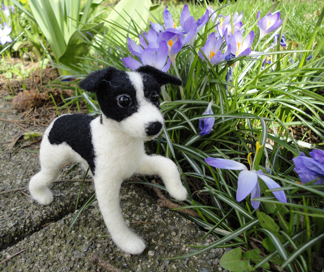 Wall-e the miracle dog –adopted